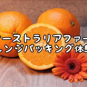 【オーストラリアファーム】オレンジパッキング体験談