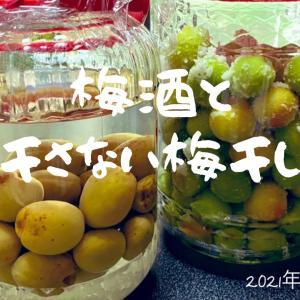 【40代一人暮らし】小さなお庭の紫陽花/初めての簡単梅酒・ご近所さんから教わった 干さない梅干し(梅漬け)