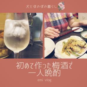 【晩酌vlog】初めて作った梅酒で一人晩酌/クリストファー・ストン薔薇のお花をご紹介