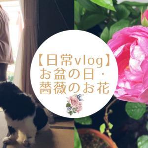 【日常vlog】ちょっとしたお盆の日・薔薇のお花/ロイヤル・ジュビリー