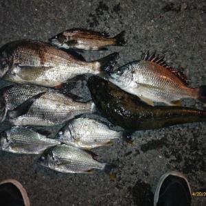 4月20日  夜釣りでマゴチ55cm・チヌ46cm