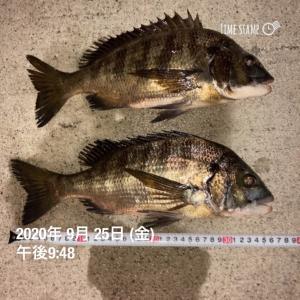 9月25日   21時からのチヌ釣り