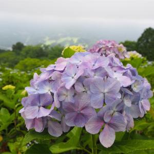 梅雨の時期にオススメの山!蓑山で紫陽花鑑賞☆