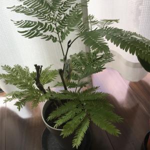 新しい観葉植物を迎えました!