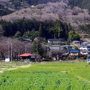 巾着田(埼玉県日高市)四季折々ぶらぶらと散策できます