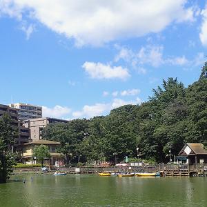 見次公園(東京都板橋区)広い池と鴨と手漕ぎボート