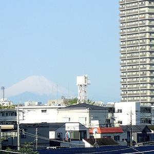 赤羽で見る富士山と芝桜(東京都北区)新荒川大橋から西へ