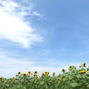 「山形の車窓から~その1~」のどかな田舎町のひまわり畑