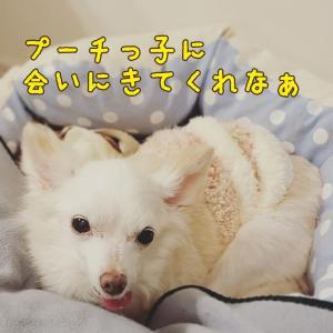 """""""11月15日(日)鎌倉譲渡会@PETON Kamakura"""""""