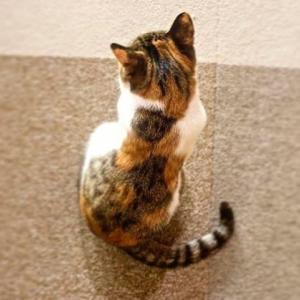 安楽死を医師に勧められたけど…決心できない…生まれつき排便困難な結腸の病気を抱えた仔猫ちゃん