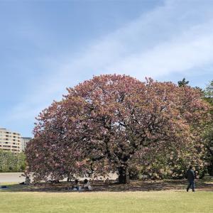 新宿御苑でお散歩🚶♂️