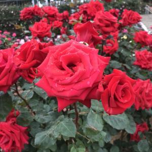 美しい花には棘がある??