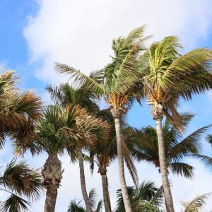 アメリカで「フロリダのバカ者」がトレンド入り?日本でも江ノ島や吉祥寺が混雑?