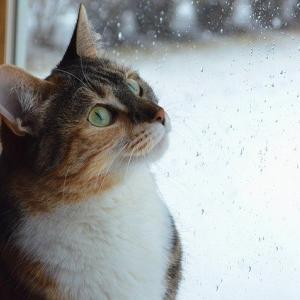 macocca(マコッカ)のかわいい猫柄折りたたみ傘は晴雨兼用で便利 コロナ対策にも