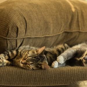 猫がいるなら防水カバーが便利でおすすめ!猫の嘔吐や粗相から布団や家具を守ります