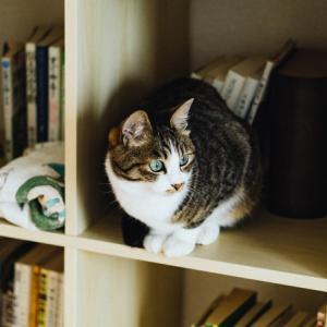 「おじさまと猫」5巻を読んで~人気の理由と猫の脱走を防止するグッズ3つ