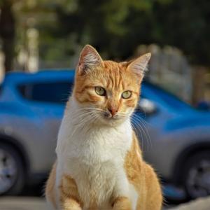 猫と車で快適に移動する方法 あると便利なグッズも用意しておこう