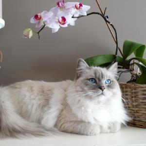 リアルな猫フィギュアをオーダーできる通販サイト「3Dペットショップ」がすごい