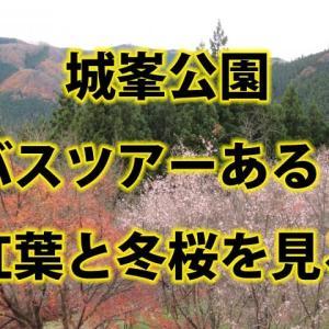 城峯公園バスツアーはある?混雑を避けて見る紅葉と冬桜2020!