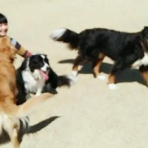 愛犬ティラ&ラテの合同誕生日会