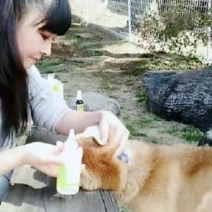 僕はキレイ好き、柴犬デンデン日々のケア