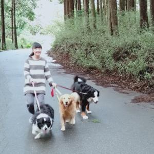 大型犬&中型犬の多頭飼いは体力勝負!