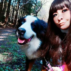 バーニーズマウンテンドッグお嬢とハイキング