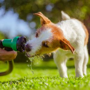 犬に水分は大切!飲まないときの原因や対策〔犬の管理栄養士監修〕