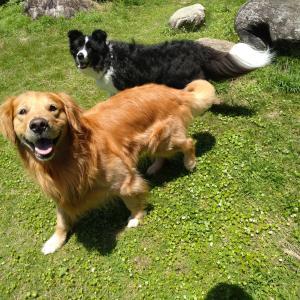 久々の晴れ、愛犬の熱中症対策開始!