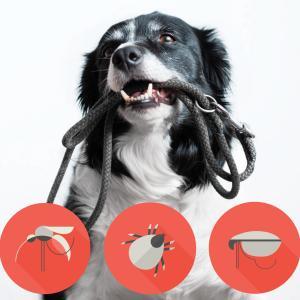 犬にダニを見つけたら?対策や取り方など