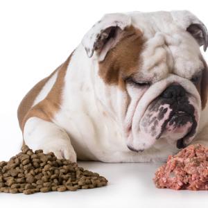 犬の手作りご飯の基本、量や配分など〔管理栄養士監修〕