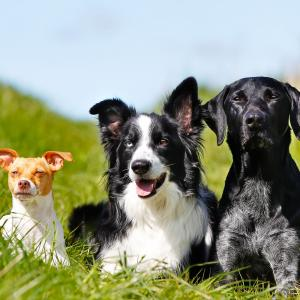 犬の手作りご飯|必要栄養素と食材2〔管理栄養士解説〕
