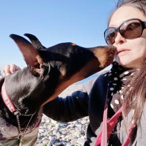 愛犬ドーベルマンと朝の海散歩。怖がるおはぎ
