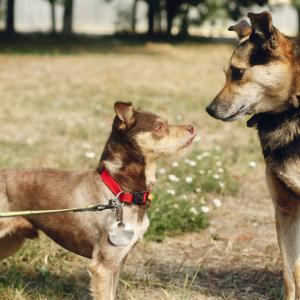 犬の散歩時の引っ張り癖を直す!6つの方法