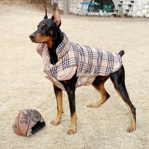 ものすごく走る犬&木の伐採をがんばるおはぎパパ