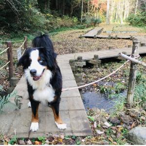 愛犬バーニーズと歩いた道&ドーベルマンと歩く道