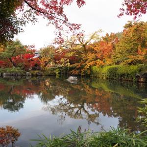 池に写る紅葉を撮りたくて