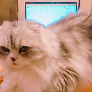 FIP(猫伝染性腹膜炎)クラウドファンディングについて