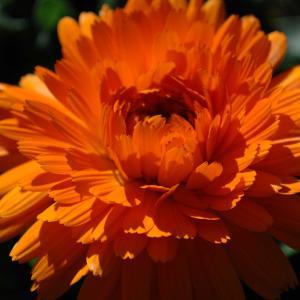 元気を貰える花と、『つぐない』の思い出
