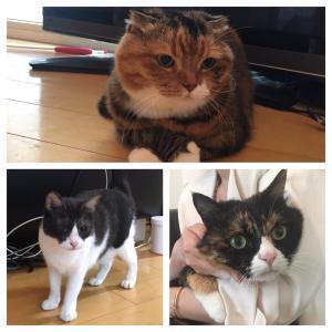 猫ちゃん海外へ