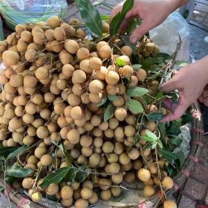 ベトナムで身近なロンガン(リュウガン)を食す
