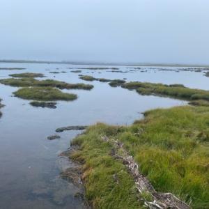 早朝カヌーと満潮時の湿原