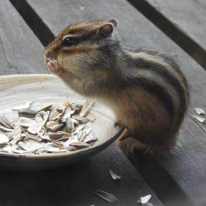 後ろ姿と食べる姿がカワイイよ!