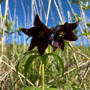霧多布湿原の花(6月中旬から下旬)