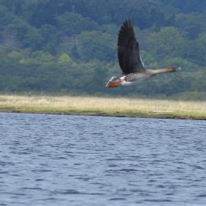 カヌーと天気と野鳥と・・・