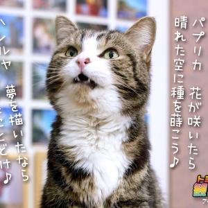 ★トミー「パプリカ」を唄う…σ(=^‥^=)