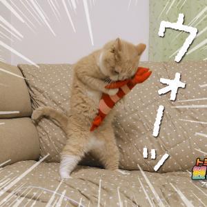 エビちゃんvsゆず…(=^・ェ・^=))ノ🦐