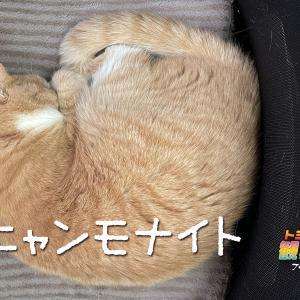ゆずのニャンモナイト!猫の『ニャンモナイト』についてちょっと調べてみました!