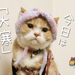 今日は「大寒」で暦の上では一番寒い日だニャ…