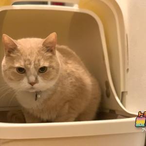 猫のおしっこチェックしてますか!「毎月22日はおしっこチェックの日」